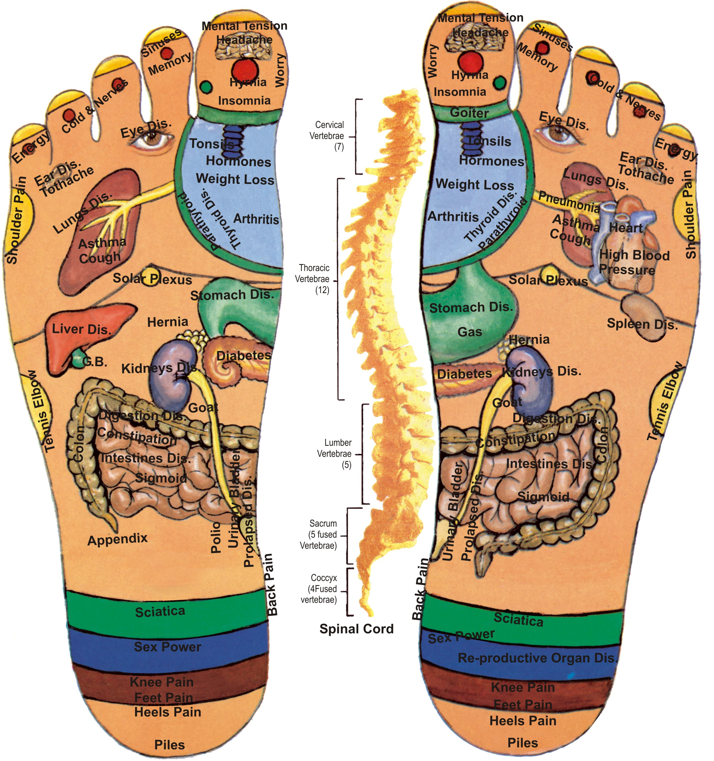 Acupressure points in Foot